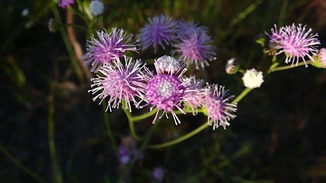 blomst 1 Torkjell Leira