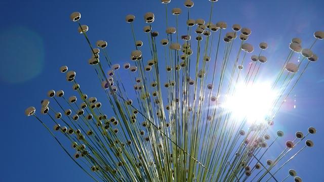 blomst 4 Torkjell Leira