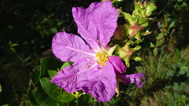 blomst 5 Torkjell Leira