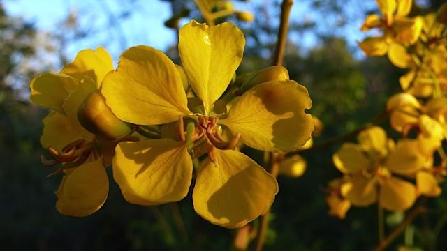 blomst 6 Torkjell Leira