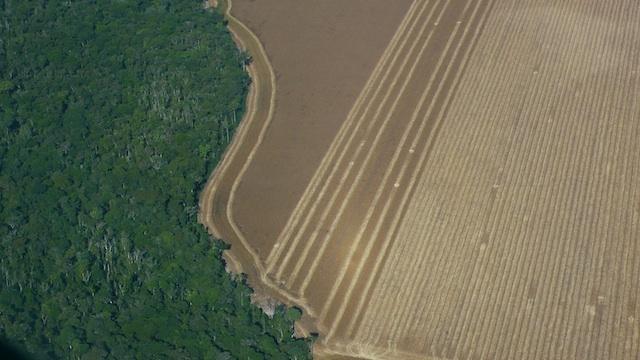 avskoging+soya+xingu+TL
