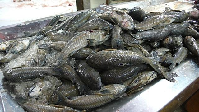 Para market fish Torkjell Leira