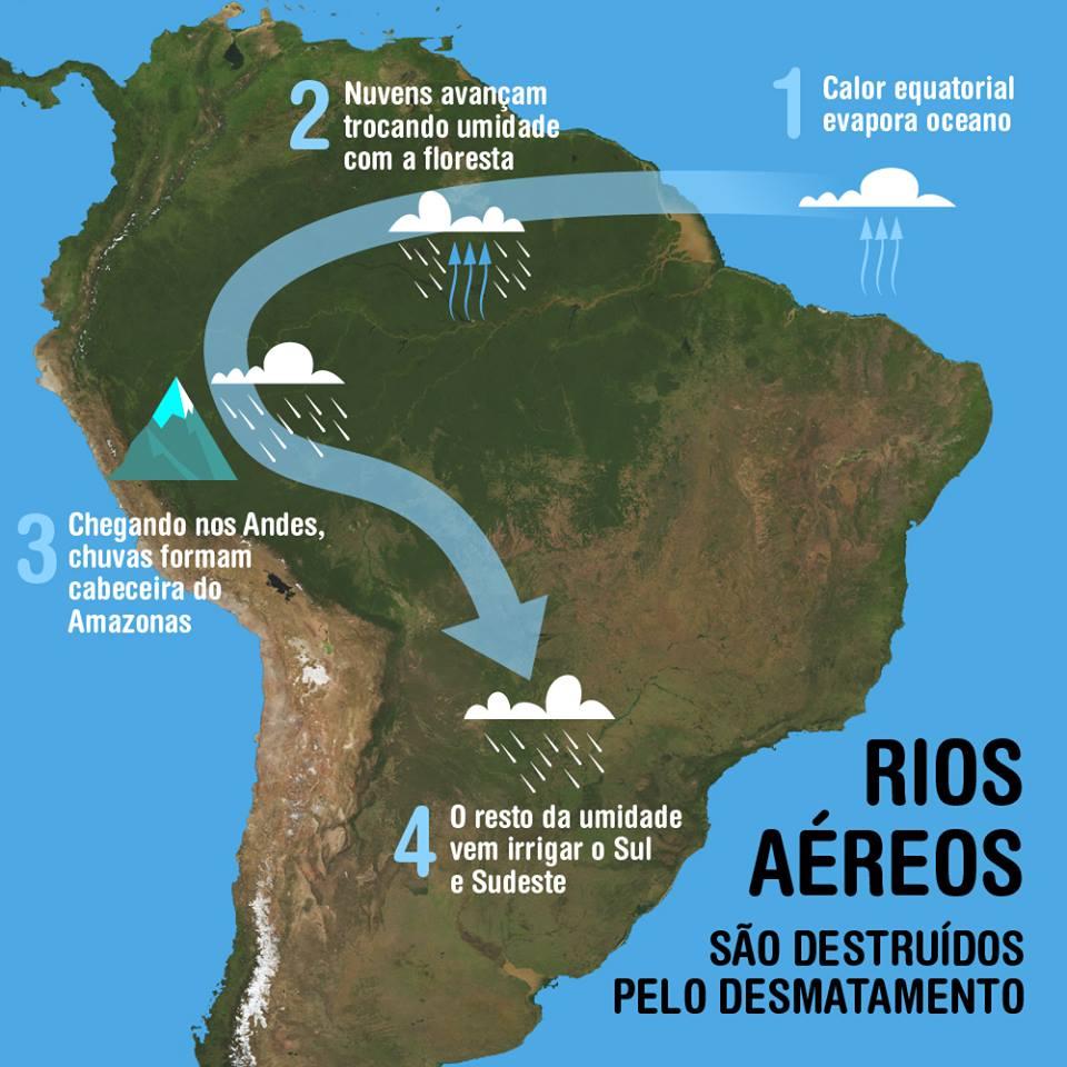 Arvore - Rios aereos 2